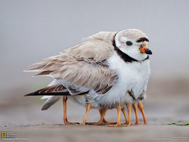 birdandbiddies