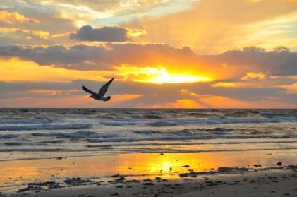 sunrise-promise-pic.jpg