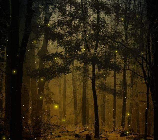 fireflies whimayko