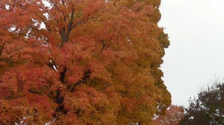 goldtree