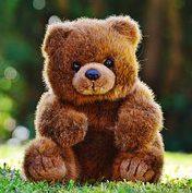 bear-1295091__180