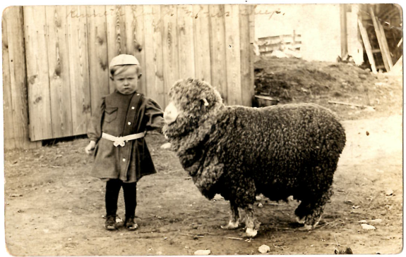 a-boy-and-his-sheep