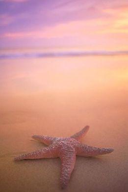 star_fish_